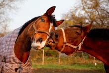 Wofür Pferdebesitzer Geld ausgeben